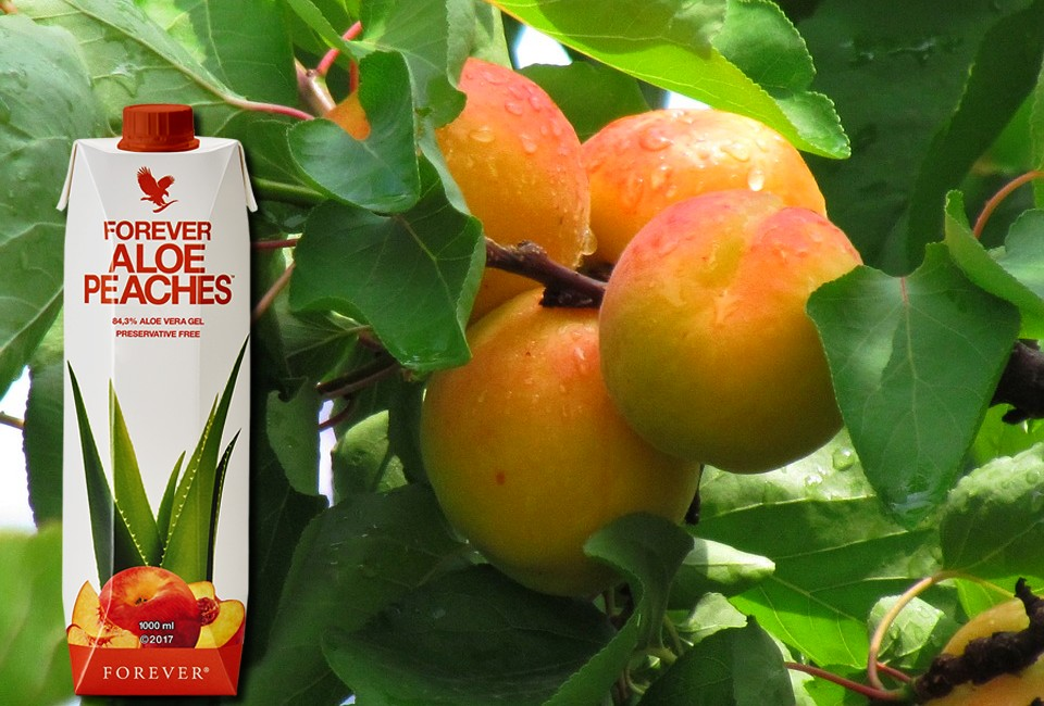 Aloe peche forever living products aloe vera de la baie