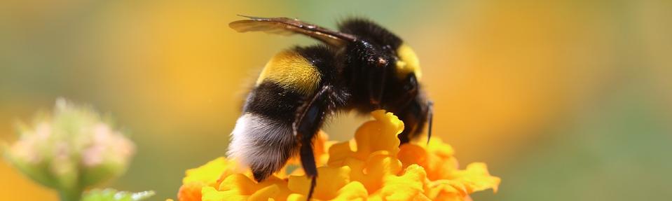 Forever bee products produits de la ruche flp aloe vera de la baie