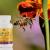 Vidéos produits de la ruche
